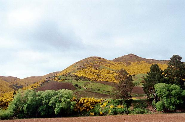 Southern New Zealand Hillside
