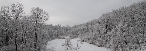 Winter Wooded Scene