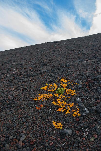 Wildflowers on cinder cone