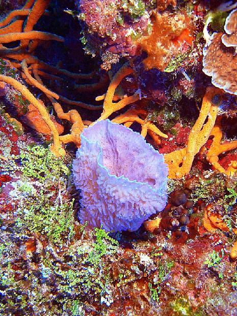 Vase Sponge & Coral