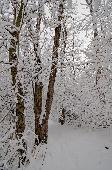 WINTER WOODED SCENE